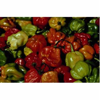 Mixed colored mini peppers standing photo sculpture