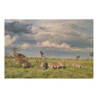 Mixed Herd Of Grevy's Zebra (Equus Grevyi) Wood Wall Decor