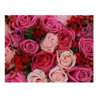 Mixed pink roses by Therosegarden Postcard