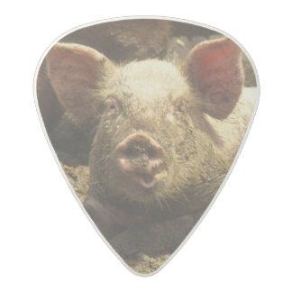 MO: Ste Genevieve, pig farm Acetal Guitar Pick