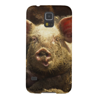 MO: Ste Genevieve, pig farm Galaxy S5 Cases