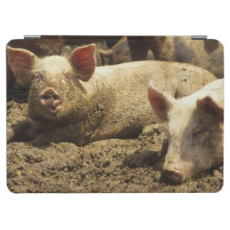 MO: Ste Genevieve, pig farm iPad Air Cover