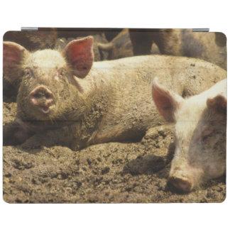 MO: Ste Genevieve, pig farm iPad Cover