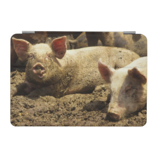MO: Ste Genevieve, pig farm iPad Mini Cover