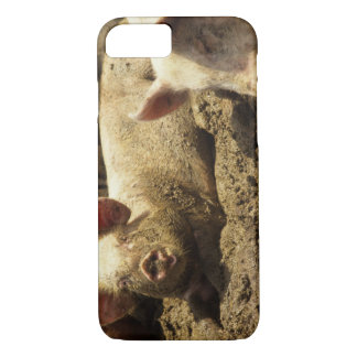 MO: Ste Genevieve, pig farm iPhone 8/7 Case