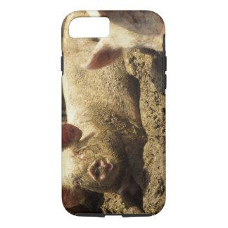MO: Ste Genevieve, pig farm iPhone 8/7 Case