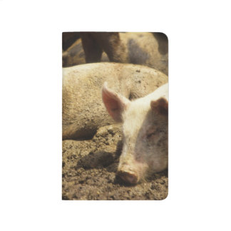 MO: Ste Genevieve, pig farm Journal