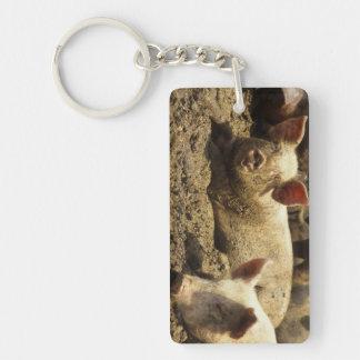 MO: Ste Genevieve, pig farm Rectangle Acrylic Key Chain