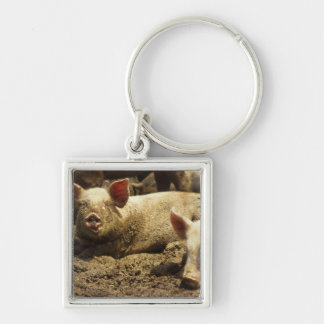 MO: Ste Genevieve, pig farm Key Chains