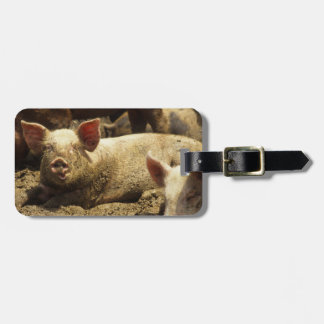 MO: Ste Genevieve, pig farm Luggage Tag