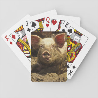 MO: Ste Genevieve, pig farm Playing Cards