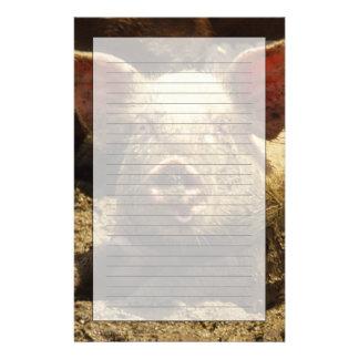 MO: Ste Genevieve, pig farm Stationery