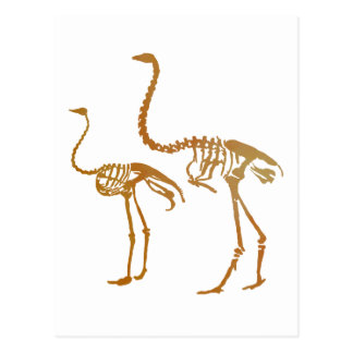Moa and ostrich skeleton postcard