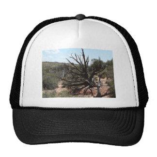 moab scenery mesh hat
