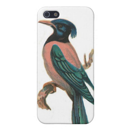 mobile iphone speckcase - bird picture - paslor cases for iPhone 5