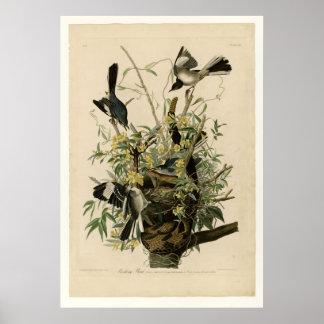 Mocking Bird Posters