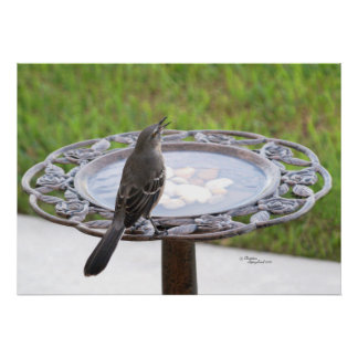 Mockingbird and Birdbath Poster