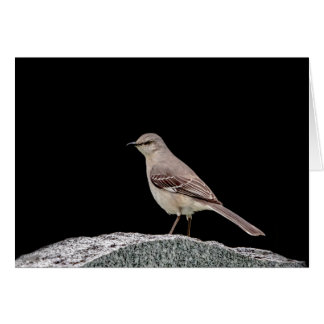Mockingbird on a tombstone card
