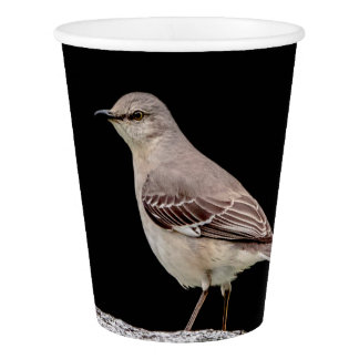 Mockingbird on a tombstone paper cup