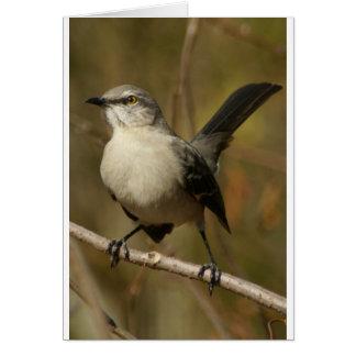 Mockingbird Ornithology Card
