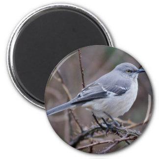 Mockingbird Ornithology Magnet
