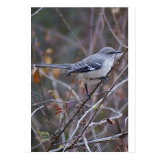 Mockingbird Ornithology Postcard