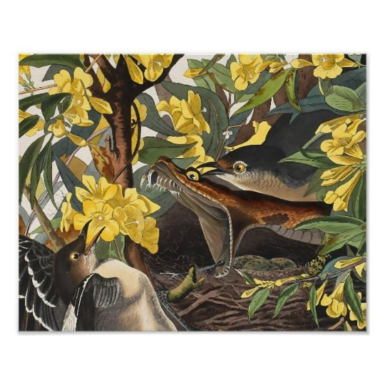 Mockingbirds, John James Audubon Poster