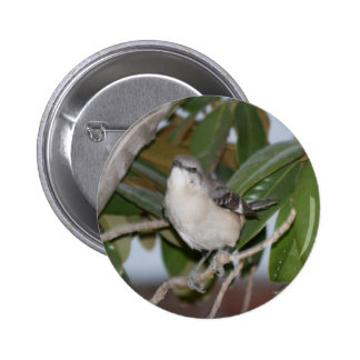 Mockingbutton - Northern Mockingbird on Magnolia 6 Cm Round Badge