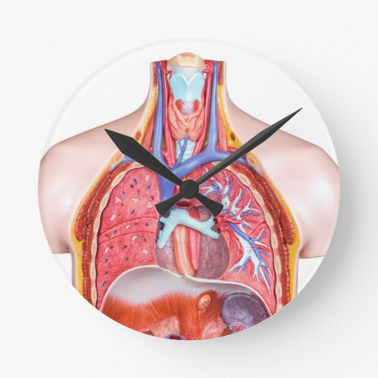 Model internal human body on white background round clock