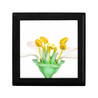 Model of flower with stamens and pistils on white small square gift box