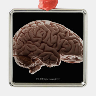 Model of human brain, studio shot ornaments