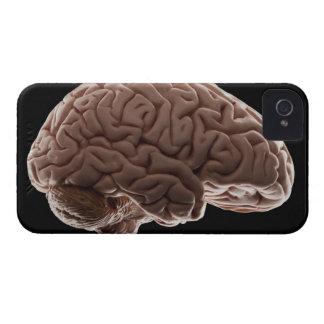 Model of human brain, studio shot iPhone 4 Case-Mate cases