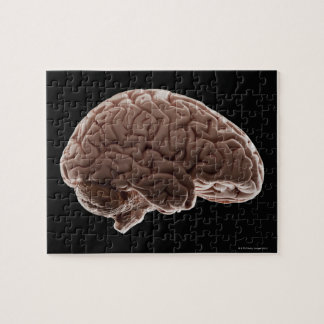 Model of human brain, studio shot jigsaw puzzle