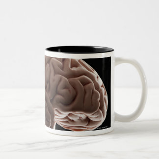 Model of human brain, studio shot Two-Tone coffee mug