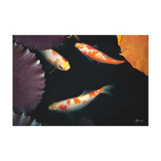 Modern Three Koi in Lily Pond Canvas Print