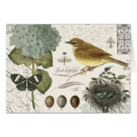 modern vintage French bird and nest Note Card