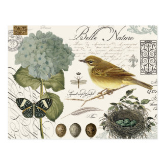 modern vintage French bird and nest Postcard