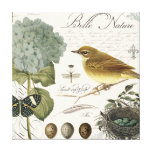 modern vintage French bird and nest Stretched Canvas Print