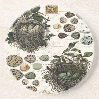 Modern Vintage French bird nests and eggs Beverage Coasters