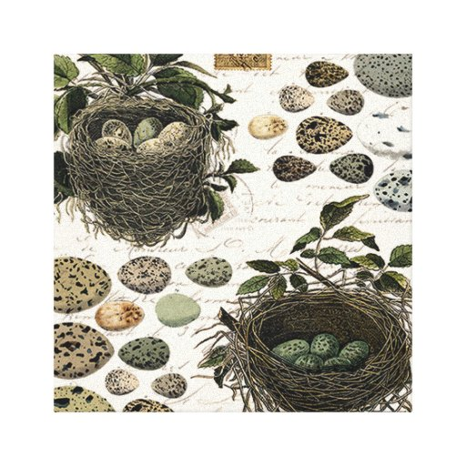 Modern Vintage French bird nests and eggs Canvas Prints