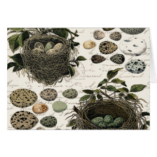 Modern Vintage French bird nests and eggs Card