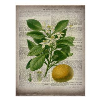 modern vintage french country botanical art orange postcard