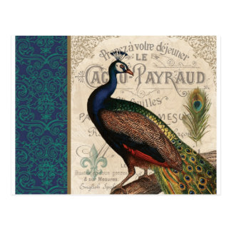 modern vintage french peacock postcard
