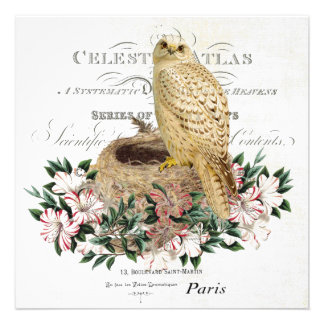 modern vintage French winter owl invitiation Announcement