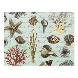 Modern Vintage Seashells Postcard