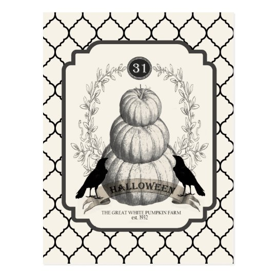modern vintage white pumpkins postcard