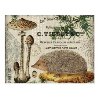modern vintage woodland hedgehog postcards