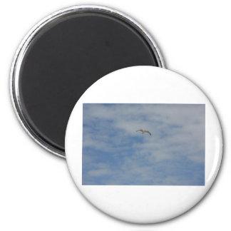 Moewe im Flug 6 Cm Round Magnet