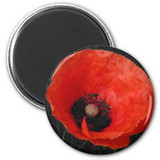 Mohnblume red poppy Photo Foto 6 Cm Round Magnet