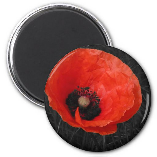 Mohnblume red poppy Photo Foto Refrigerator Magnets